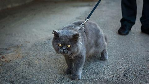 Lezerscolumn: Met de kat aan de lijn naar de dierenpsycholoog?