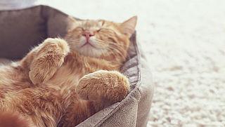 Kattenoppassers 'booming business'