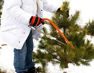 Gratis kerstbomen staan klaar