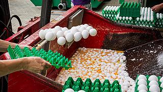 'Ook Duitse pluimveebedrijven werkten samen met Chickfriend'