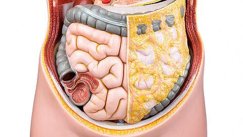 RADAR+: 10 dingen die je moet weten over je darmen