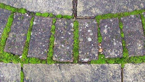 Zo verwijder je mos op je terras of in je tuin