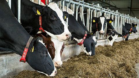 WHO: 'Gebruik geen antibiotica bij gezonde dieren'