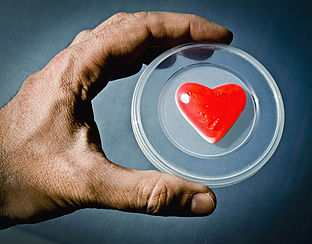 Steeds meer orgaandonaties