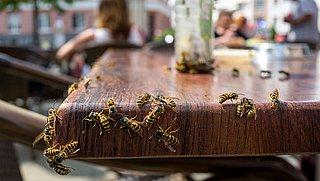 Hoe verjaag je wespen op een diervriendelijke manier?