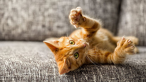 Een kat als huisdier, hoeveel geld en tijd kost dat?}