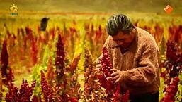 De quinoa-hype