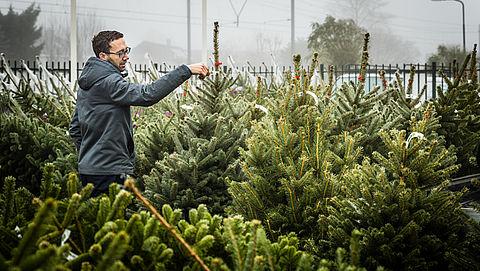 8 tips voor een groene kerstboom met Kerstmis}