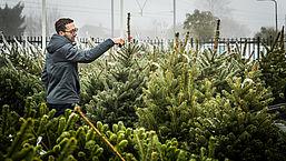 8 tips voor een groene kerstboom met Kerstmis