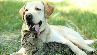 Waarom zijn honden en katten populair in coronatijd?