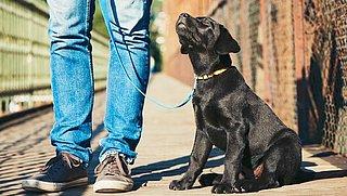 Actievoerders protesteren tegen illegale puppyhandel Marktplaats
