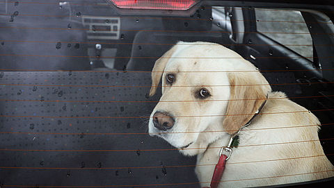 Nieuw bord: laat je hond niet in de auto achter}