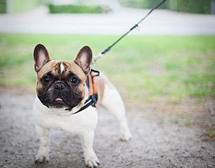 'Fairfok' keurmerk voor hondenfokkers