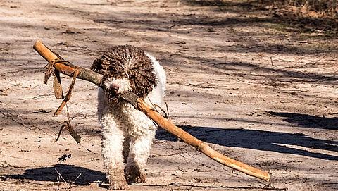 60.000 handtekeningen voor afschaffing hondenbelasting}