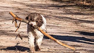 60.000 handtekeningen voor afschaffing hondenbelasting