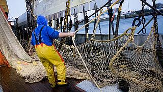 Minister hoopt verbod op pulsvissen tegen te houden