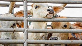 'Minister nalatig in bestrijding hitteleed dieren'