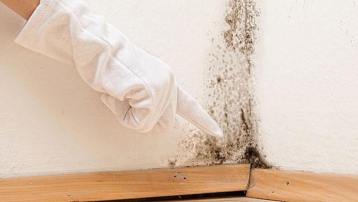 Hoe verwijder je schimmel in je huis?