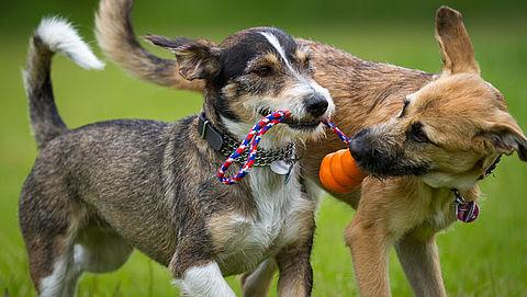 Hondenpaspoort vanaf 2020 verplicht