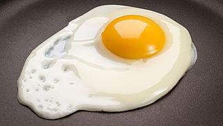 'België meldde eierprobleem pas na anderhalve maand'