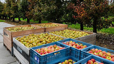 Fruittelers slaan handen ineen voor hogere prijzen}