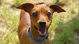 Wie is aansprakelijk bij schade door hond? | TomTom splitst kaarten op