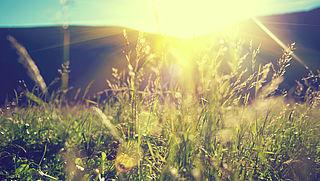 Zorgen over verdwijnen bloemen, insecten en vogels uit landschap