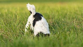 'Laat je hond niet in een dijk graven'