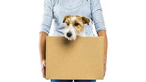 Invoer honden en katten wordt moeilijker na brexit}