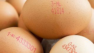 Keurmerken, codes en claims: zo kies je het beste ei