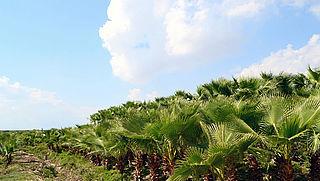 Belactie tegen investeringen banken in palmolie-industrie