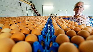 Besmette eieren