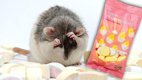 IKEA roept paasschuim terug om muizen