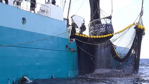Slechte voorlichting in restaurants over tonijnsoort