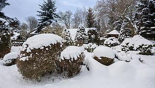 Zaterdag in Radar Radio: Hoe maak je je tuin winterklaar?