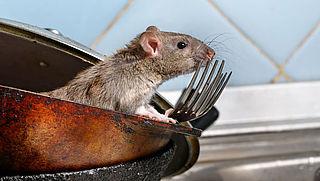 In de uitzending: Rattenoverlast | Taxivervoer