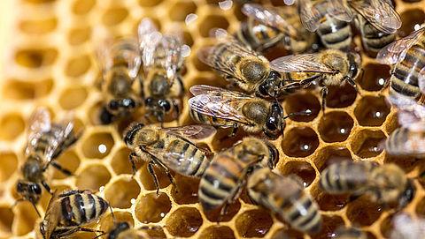 Veel bijen met uitsterven bedreigd}