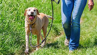 Hondenbelasting stopt in steeds meer gemeenten