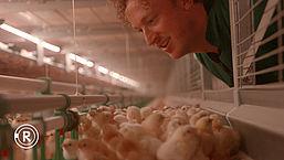 Zijn we écht welkom bij Liegebeest van het jaar De Kloeke Kip? | Radar checkt