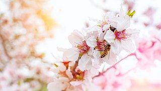 Help de uitstervende bij: zo maak je je tuin bijenvriendelijk