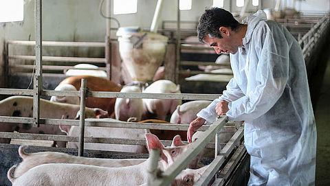 Kan varkensvlees je met corona besmetten?