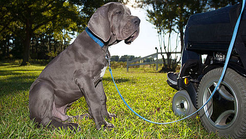 Geen opruimplicht hondenpoep voor mindervalide eigenaar}