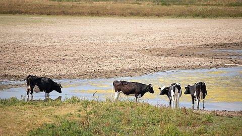 'NVWA greep niet in ondanks meldingen over hittestress dieren'