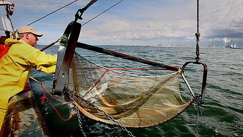 'Quota's voor vangst van belangrijke vissoorten moeten omlaag'