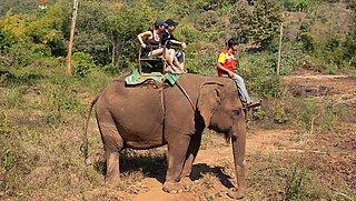 Cartoonisten en dierenorganisaties in actie tegen attracties met wilde dieren
