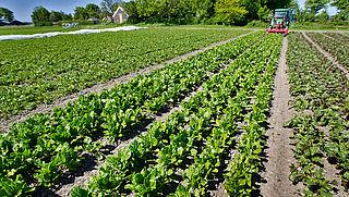 'Biologische landbouw in Nederland neemt toe'