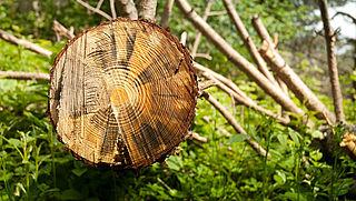 Maatregelen verzekeraars tegen ontbossing 'totaal onduidelijk'