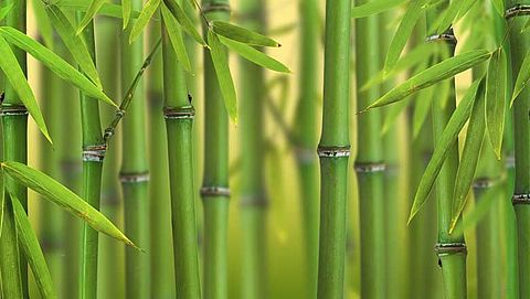 'Toezicht import bamboe niet tijgermugproof'