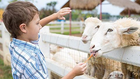 Kinderboerderijen gaan grotendeels open