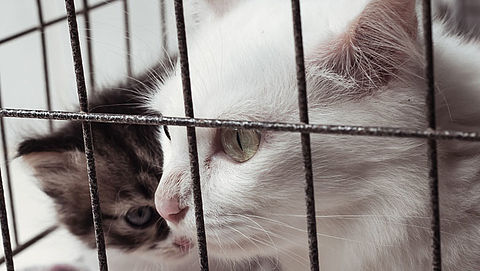 'Transparante beoordeling over noodzakelijkheid dierproeven'}